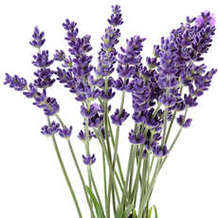 Lavender-wand-making-1529610453
