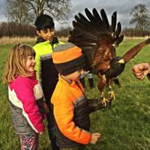 Falconry-day-1552137110