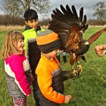 Falconry-day-1566149217