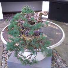 Guided-tour-bonsai-and-japanese-gardens-1580413815