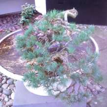 Bonsai-demontration-1580417122
