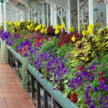 Guided-tour-glasshouses-1580417876