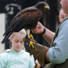Falconry-day-1554713062