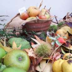 Harvest-and-apple-day-1562705705