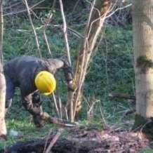 Hedge-planting-1484690823