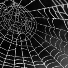 The-secret-lives-of-spiders-1538730824