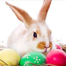 Easter-bunny-sign-post-1578948882