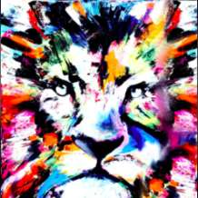 Colourful-lion-1581871797