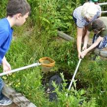 Pond-dipping-days-1492205694