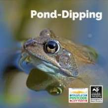 Pond-dipping-days-1532541268