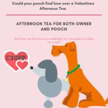 Lady-the-tramp-doggie-afternoon-tea-1578577061