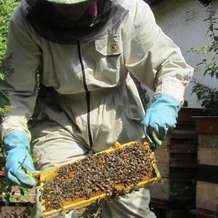 Bee-keeping-course-1532683898