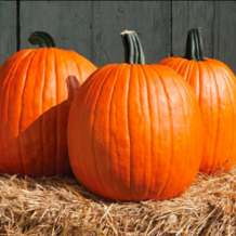 Child-friendly-pumpkin-carving-1537375183