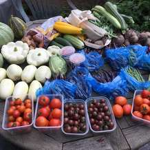 Allotment-produce-show-1555424932
