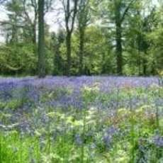 Bluebell-walks-1555358200