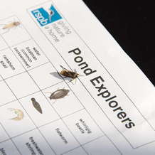 Guided-pond-dipping-at-rspb-sandwell-1527318496
