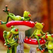 Box-of-frogs-drop-in-improv-workshop-1563221955
