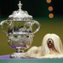 Crufts-2013-1358873607
