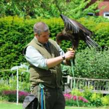 Falconry-day-1518375588