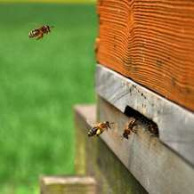 Introduction-to-beekeeping-workshop-1475523921