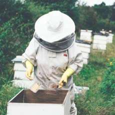 Introduction-to-beekeeping-1511713038