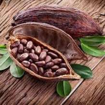 Cacao-facilitated-workshop-1537977739